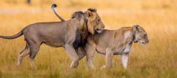 Akagera national park - Savannah park of Rwanda