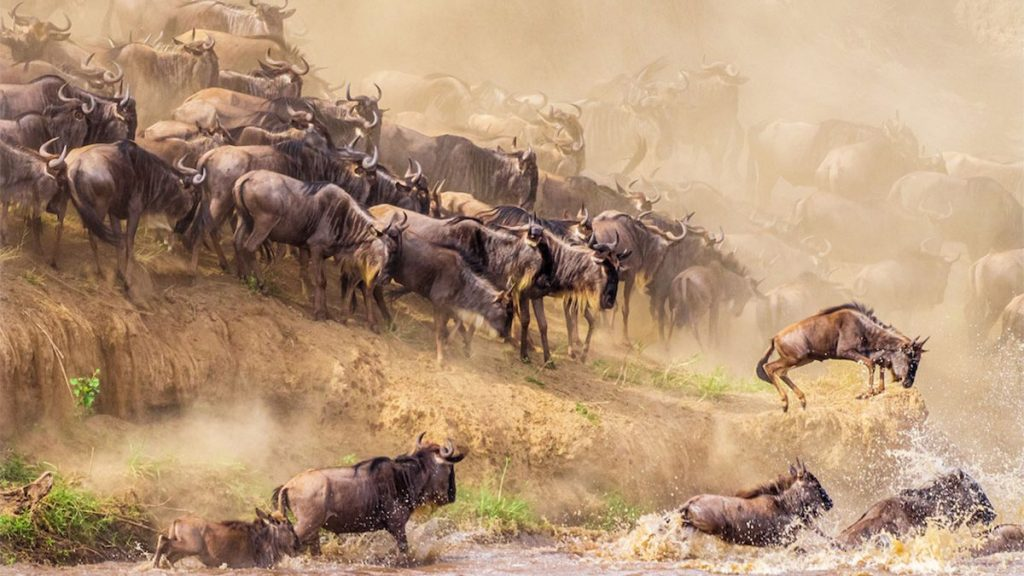 5 Days Bwindi Gorilla Trekking & Masai Mara Wildlife Safari