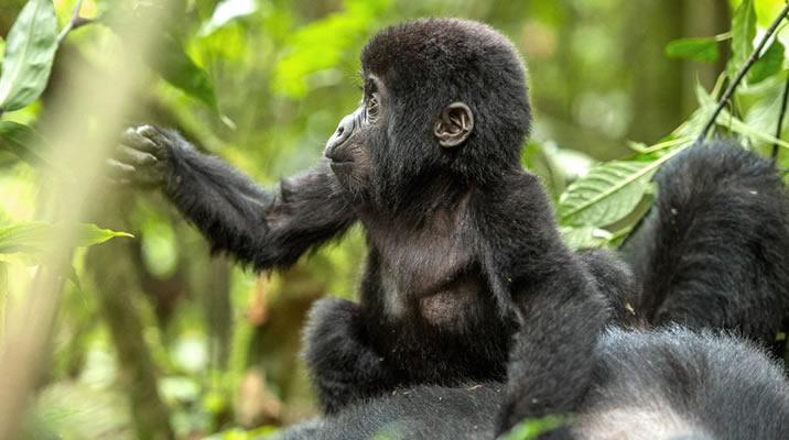 6 Days Rwanda Gorilla Trekking & Tanzania Wildlife tour