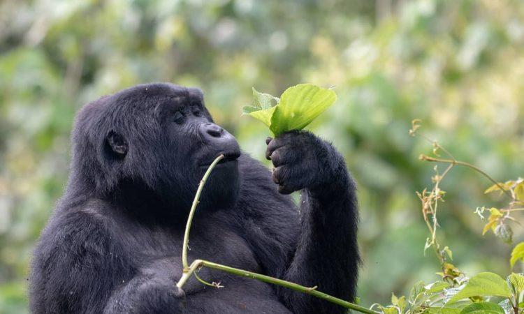 7 Days Uganda Gorilla Trekking & Tanzania Wildlife tour