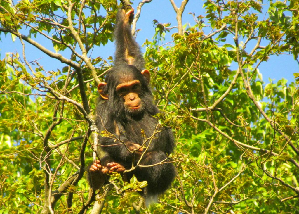 8 Days Best of Virunga