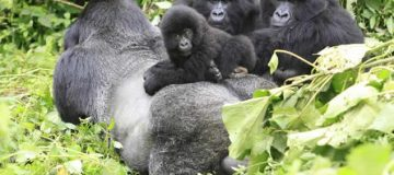 5 Days Virunga Great Ape Package