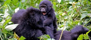 8 Days Best of Virunga