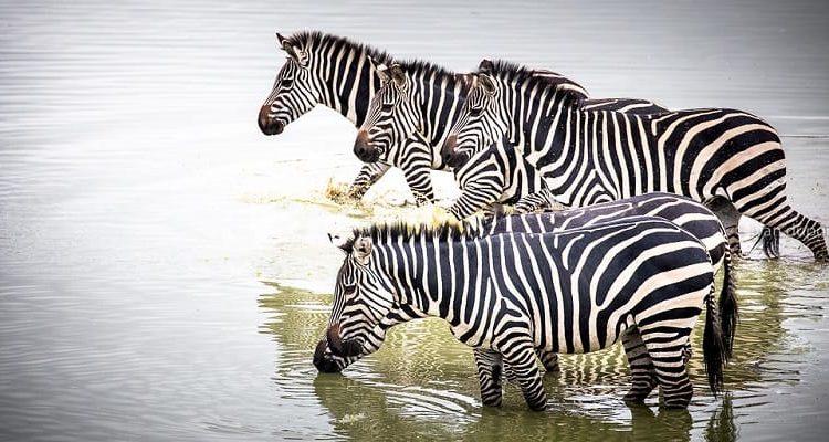 4 Days Akagera Wildlife Safari