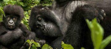 Explore The Best Of Rwanda