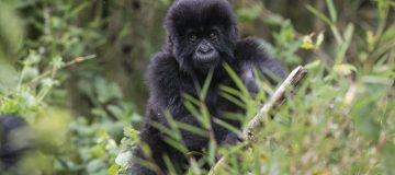 Rwanda scoops Best In Travel award from conservation