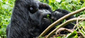 4 Days Rwanda Gorilla Trekking & Nyiragongo Hike