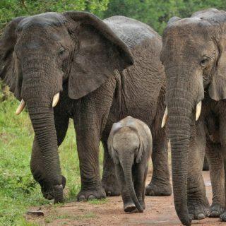 3 Days Akagera Wildlife Safari During COVID-19