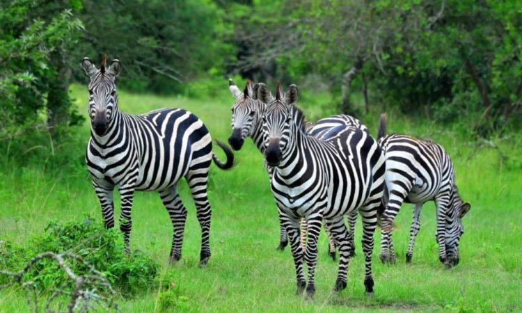 3 Days Lake Mburo Wildlife Safari during COVID-19
