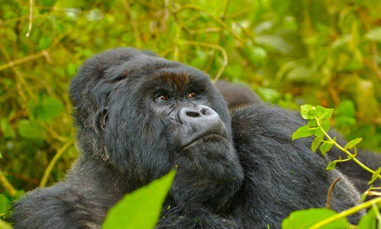7 Days Rwanda Wildlife & Primates Safaris