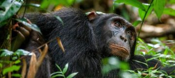 Activities in Kibale Forest National Park