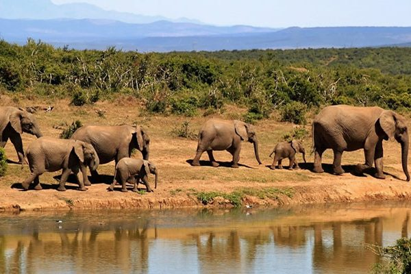 4 days Akagera national park with community cultural experience